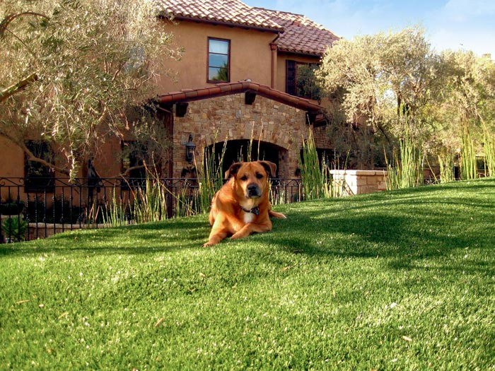 Even your pets have outdoor living needs.  Read our blog to find out more!