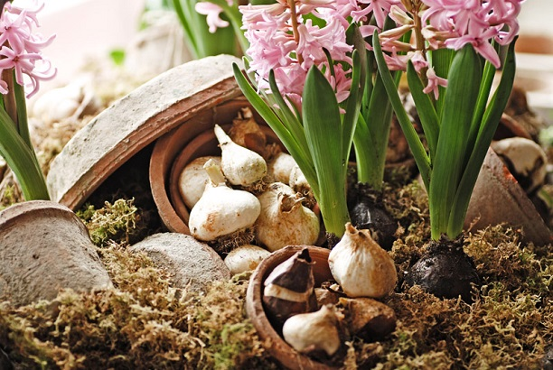 There is still time to get those bulbs in the ground for a beautiful Spring!