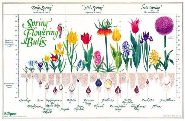 Garden Design: Garden Design with The Victory Garden . Grow ...