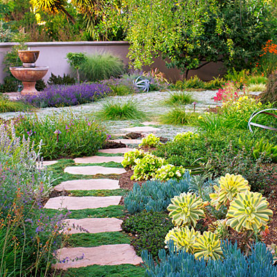 Color in the garden with low water plants for Wild design