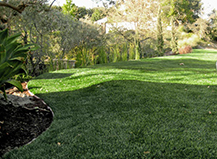 Artificial Turf Backyard Residence