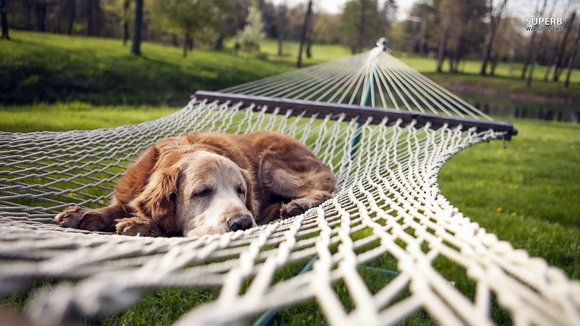 Dog resting on a hammock