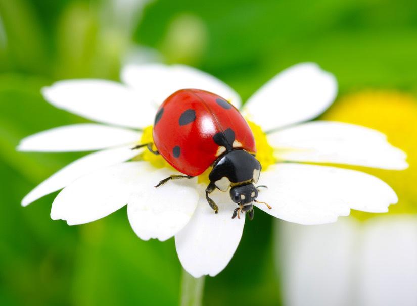 Www Lady Bug Design Com Blog