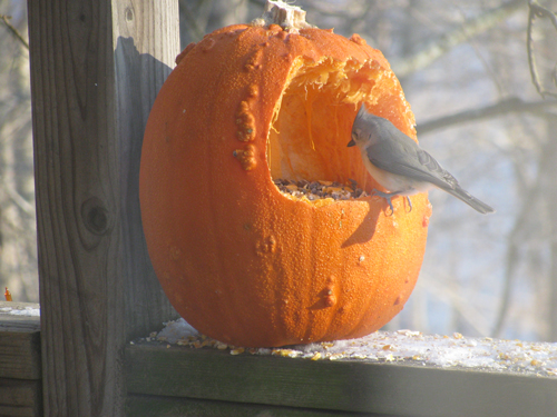 4. Feed the birds. For a quick, easy, and useful way to get rid of pumpkin seeds, simply feed them to the birds.
