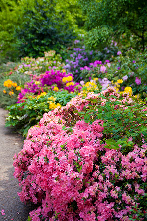 colorful plants and flowers