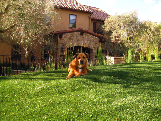 pet-friendly turf