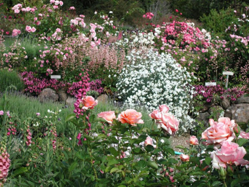 The Romance Of The Rose Garden