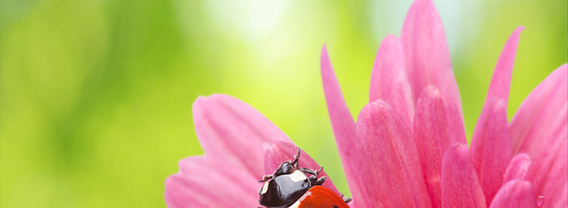 Enticing Ladybugs to Your Garden | System Pavers