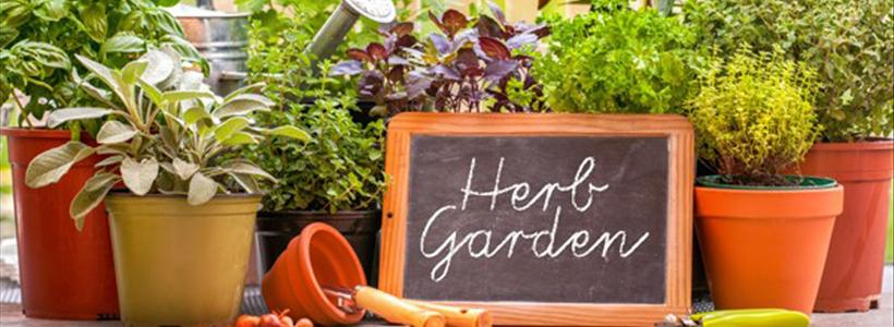 Benefits of Container Gardening | System Pavers