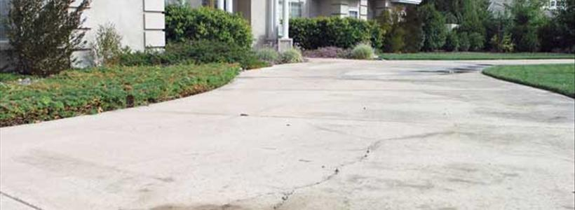 Common Yard Frustrations Homeowners Face