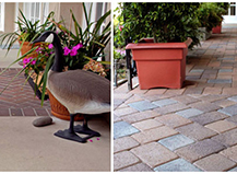 Mixed Pavers Colors Styles