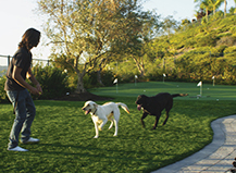 Dog Friendly Artificial Turf