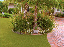 Residential Turf With Landscaping